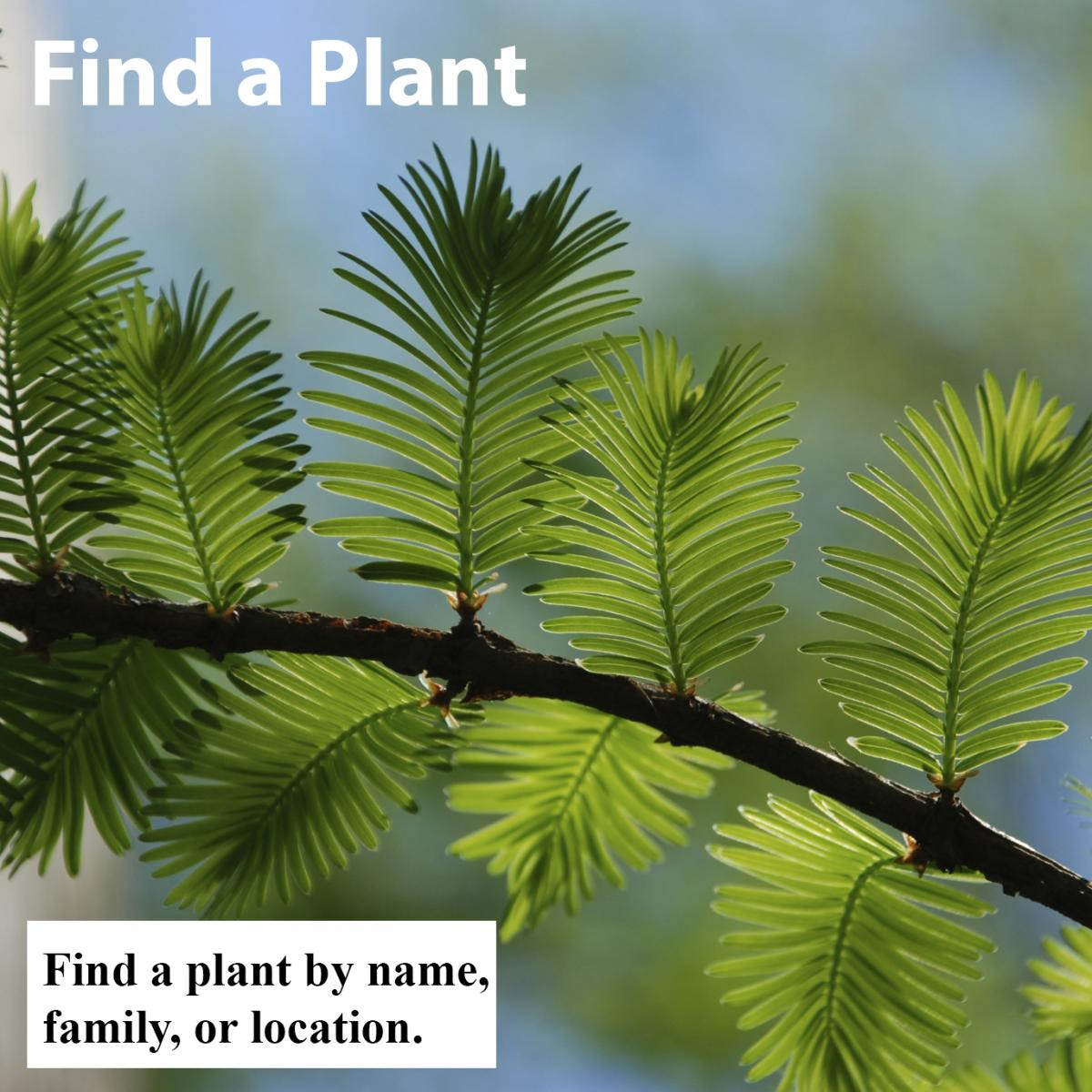 Find a plant by name, family, or location