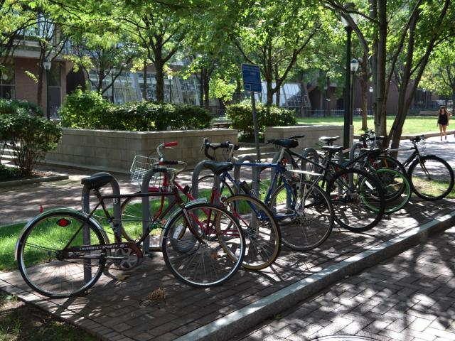 Lauder Institute bike rack