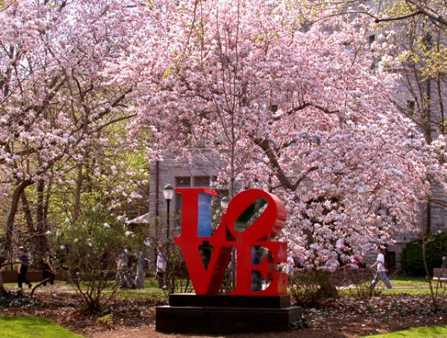 Love statue beneath a cherry blossom tree