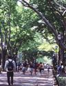 Students Walk Down Tree Covered Street