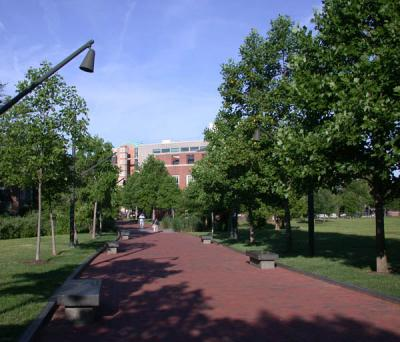 Pathway lined with trees on either side